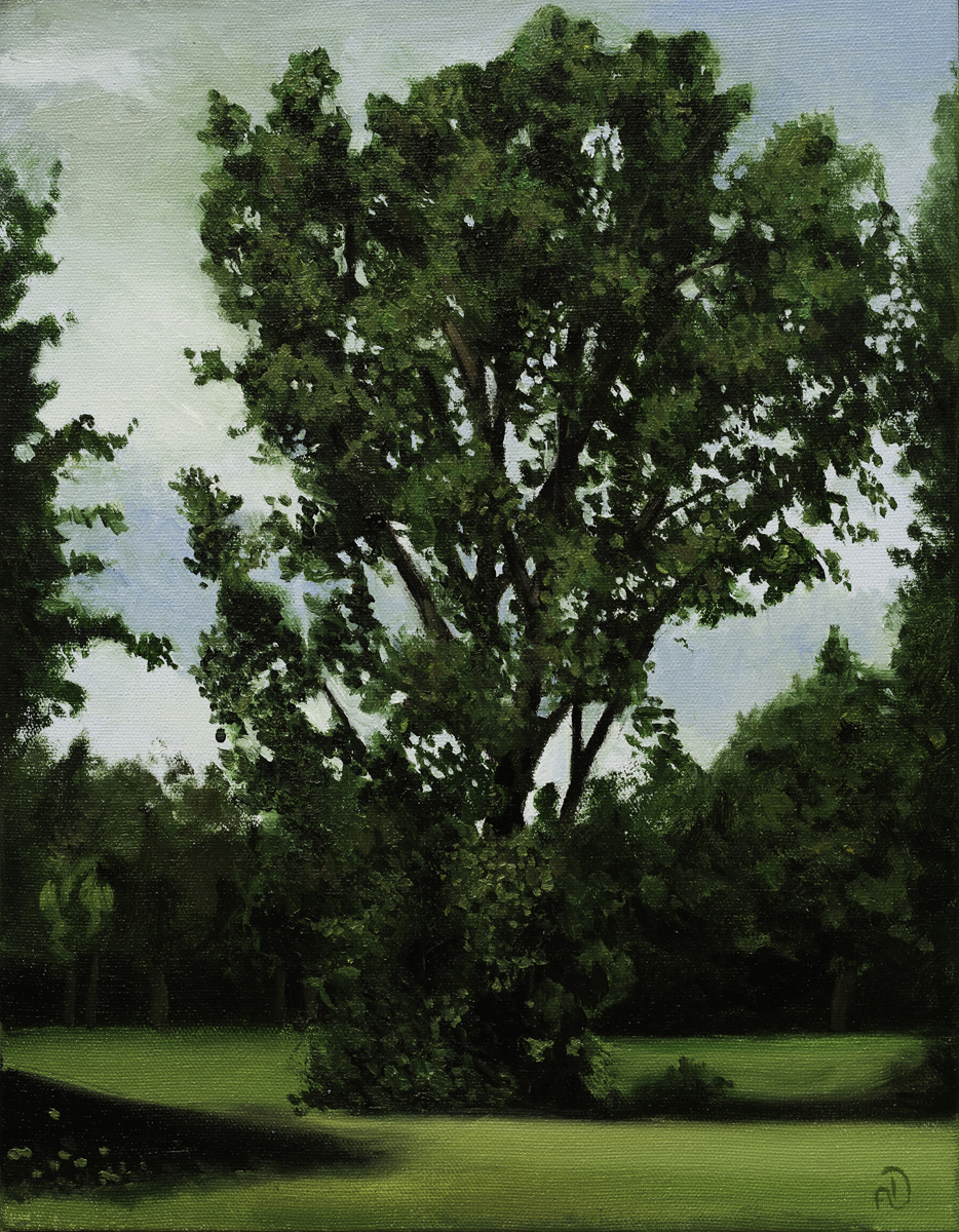 Oil Painting Tree Study canadian art