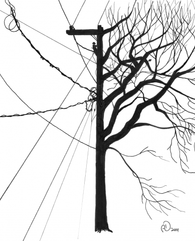tree, electricity, industrialization, past, present, transformation