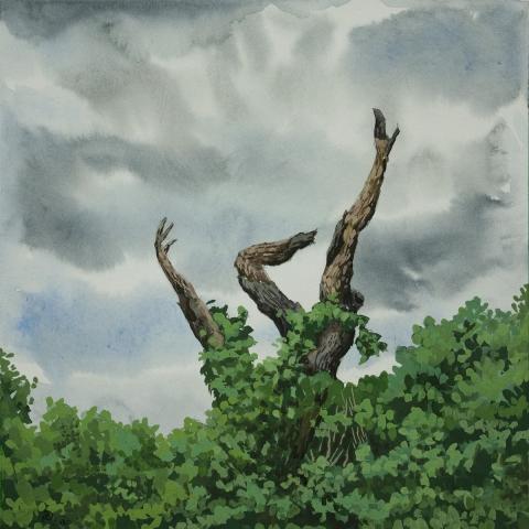 she fell tree nature fall watercolor gouache canadian art buy