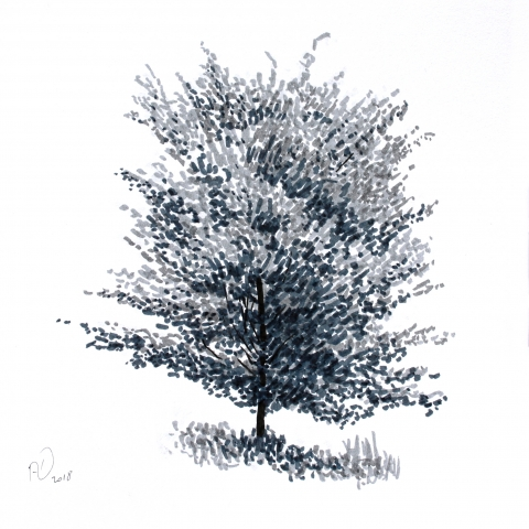 tree sketch marker drawing