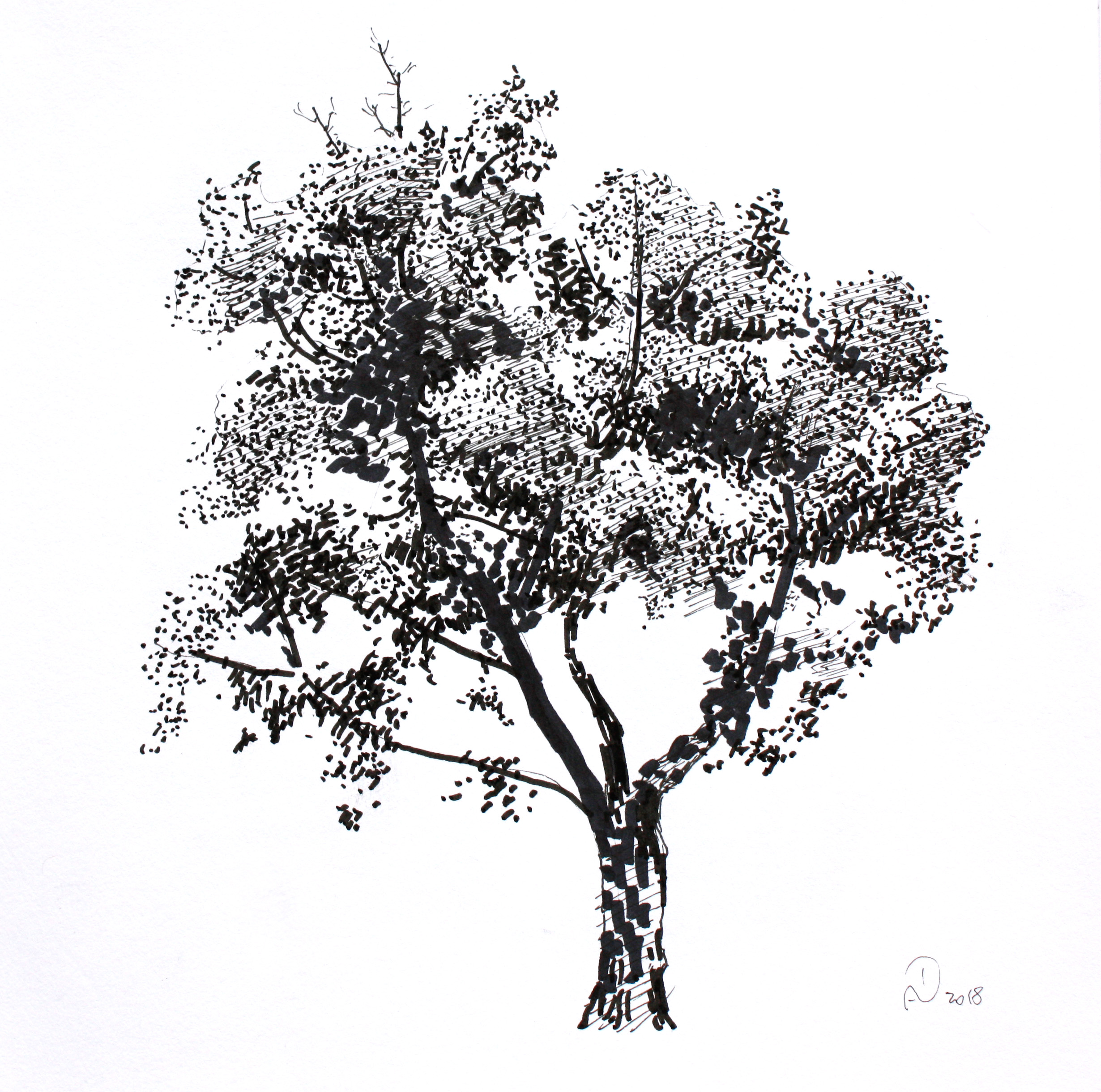 tree, ink, paper, drawing